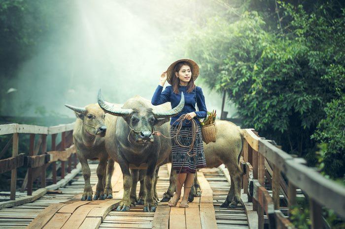 Fitbit Cows Farmer