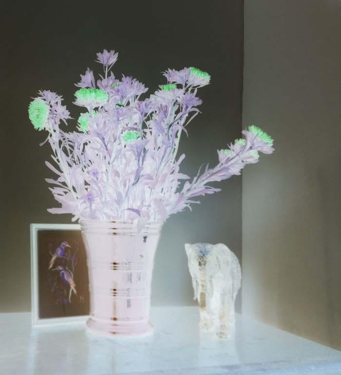 Fitting Raspi Camera Flowers Negative