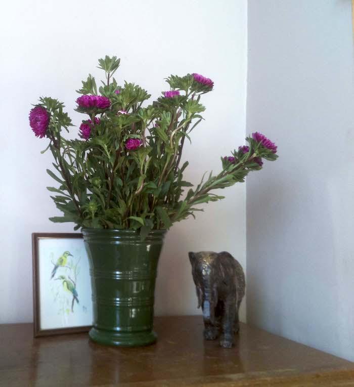 Fitting Raspi Camera Flowers Nofx