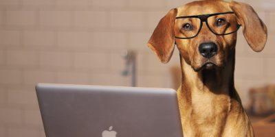 Iot Pets Headline