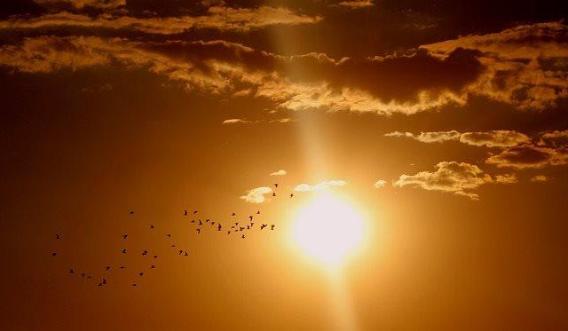 Rfid Solar Sun