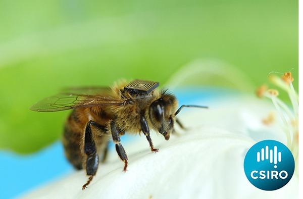 Environment Bee Backpack Csiro