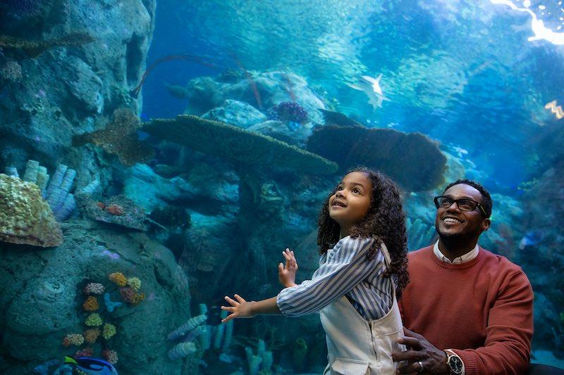 Echo Frames Smart Glasses Aquarium