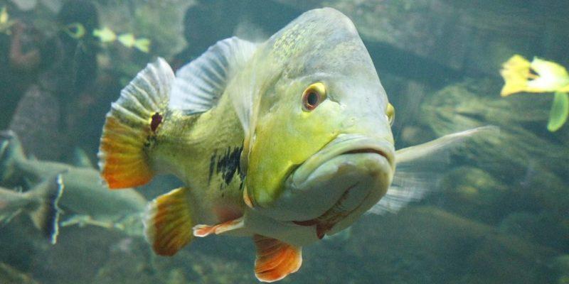 Featured Image Smart Aquariums