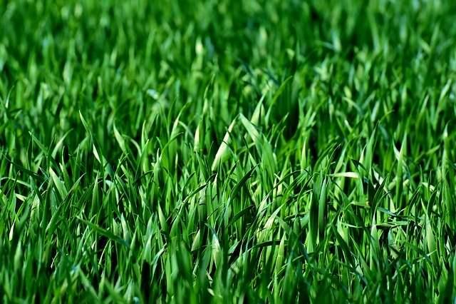 Plant Iot Grass