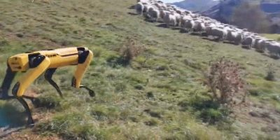 News Robot Dog Sheepherding Featured