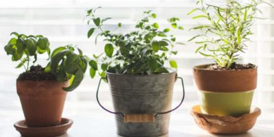 Smart Indoor Gardening Gadgets For Greener Living